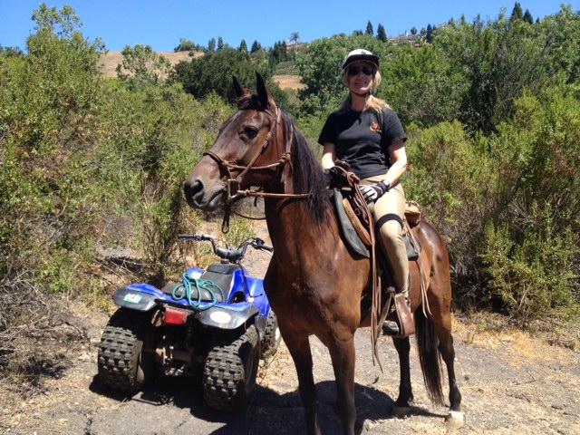 ATV Horse